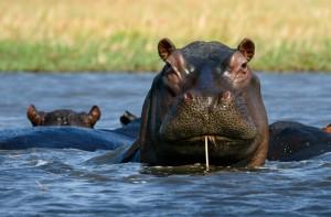 SWAZILAND-KRUGER
